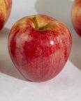 Gala Apple fruit