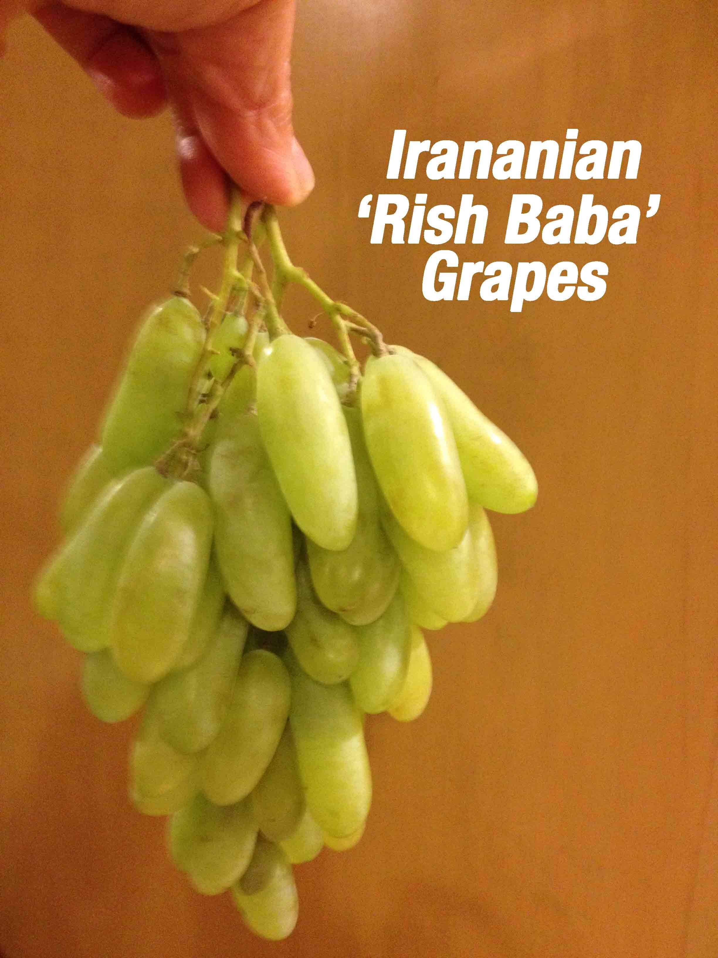rish-baba-grapes-held