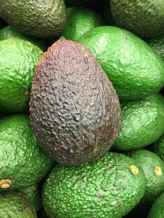 hass avocado tree fruit