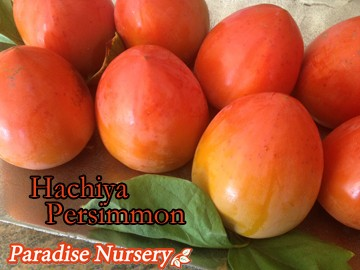 hachiya-persimmons on plate