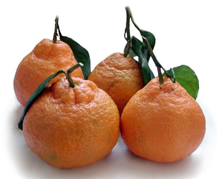 Satsuma Mandarin Mandarintree From Paradise Nursery