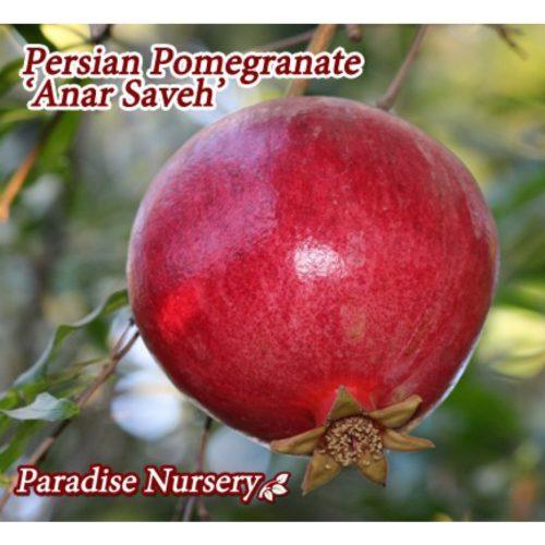 persian pomegranate