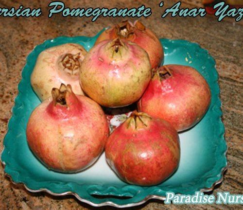 persian sweet pomegranate
