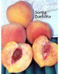 santa barbara peach