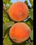 long beach peach