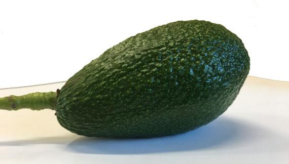 Pinkerton Avocado Fruit